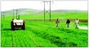 سمپاشی در مزارع کشاورزی