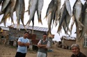 ماهیگیران ترکمن